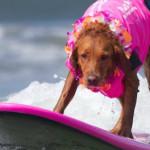 FOTO Terapie pe valuri, alături de un câine dedicat ajutorării ..