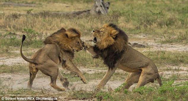 Jericho (stânga) și Cecil (dreapta). Foto: Shutterstock
