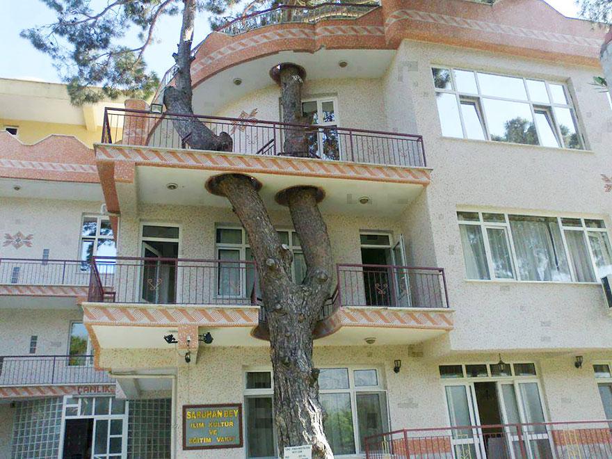 """Centru cultural ridicat în jurul unui copac """"cu vechime"""""""