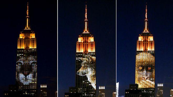 După ce a fost ucis, portretul lui Cecil a fost proiectat pe Empire State Building, alături de alte animale amenințate cu dispariția. Foto: AP