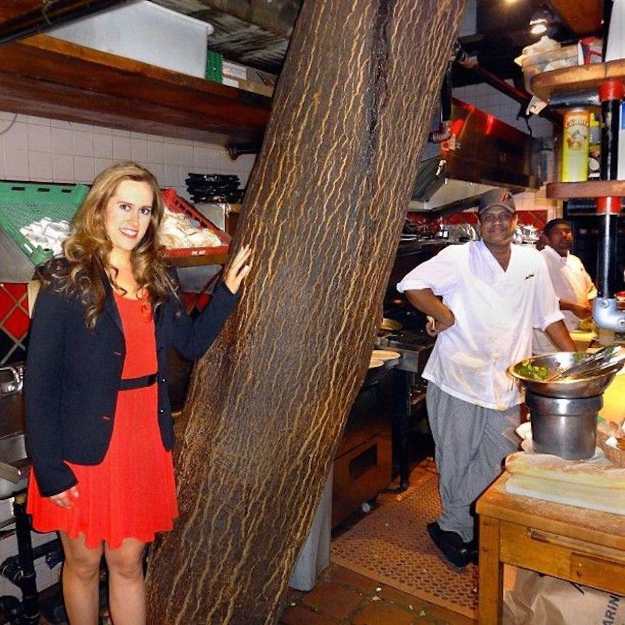 În restaurantul Kit Kat din Toronto, crește un copac cu înălțimea a patru etaje, care străbate inclusiv bucătăria