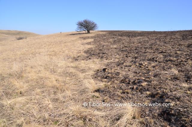 Habitat de vipera incendiat