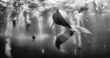 """Premiul I: """"Îmblânzitorul de balene,"""" de Anuar Patjane Floriuk"""