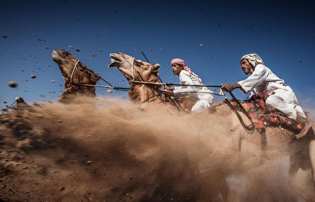 """Locul al II-lea: """"Camel Ardah,"""" de Ahmed Al Toqi"""