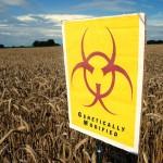 Germania se pregăteşte să interzică organismele modificate genetic