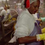 Raport: Costul uman al cărnii ieftine de pui
