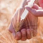 14 ţări europene au interzis organismele modificate genetic