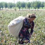 VIDEO Sclavia bumbacului din Uzbekistan