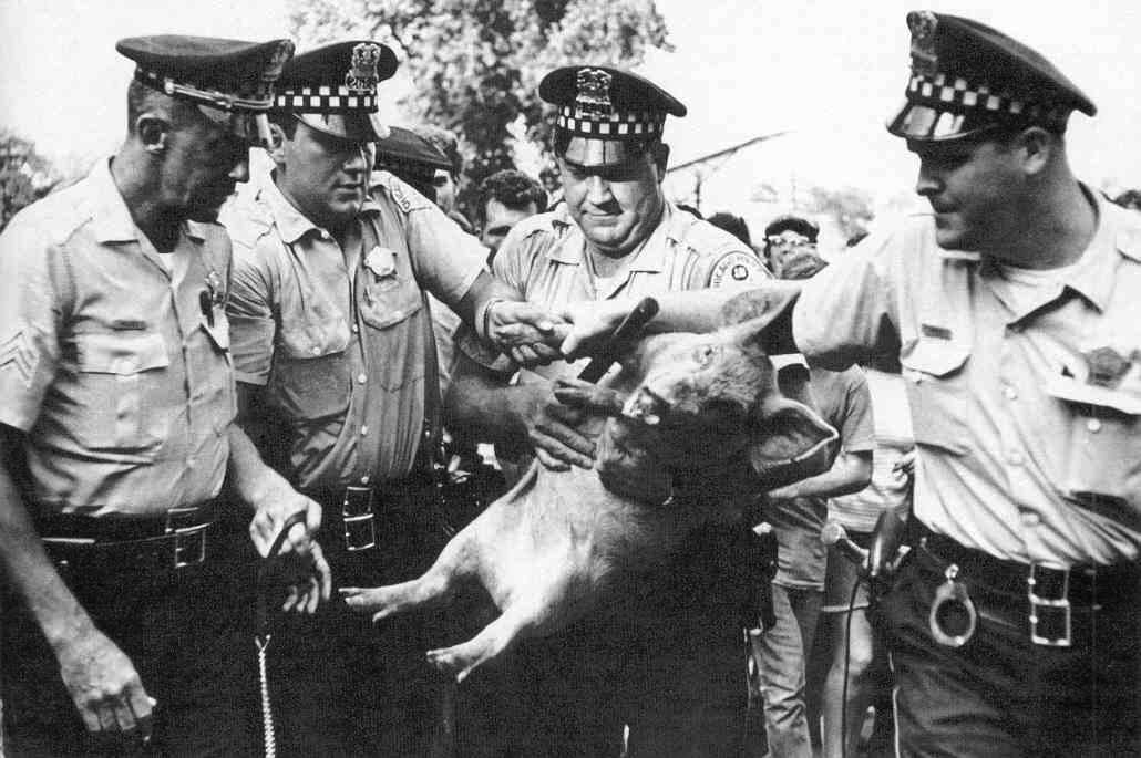 Pigasus, candidatul Yippie la alegerile prezidențiale, reținut de poliția din Chicago, înaintea deschiderii Convenției Democrate Naționale, 1968. Sursa: Kings Academy