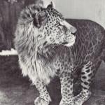 FOTO 18 animale-hibrid greu de crezut că există