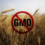 Rusia va fi lider mondial în exportul de alimente nemodificate ..