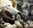 Amazing-Wolves-image-amazing-wolves-36715717-1920-1440