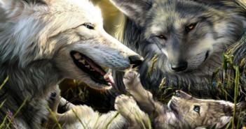 Amazing-Wolves-image-amazing-wolves-36715717-1920-1440
