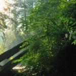 Miza conservării pădurilor, pierdută în gălăgia dezbaterii prețurilor