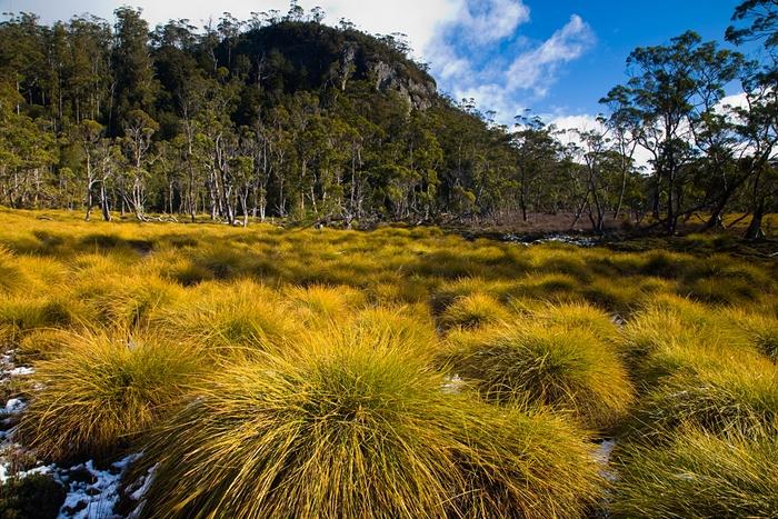 Detaliu din peisajul natural al Tasmaniei, înainte de incendiile devastatoare. Foto: Dan Broun