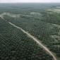 Jumătate din uleiul de palmier folosit în Europa ajunge în ..