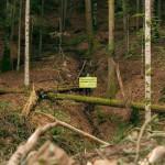 Greenpeace a cartat aproape 1.000 de hectare de păduri virgine ..