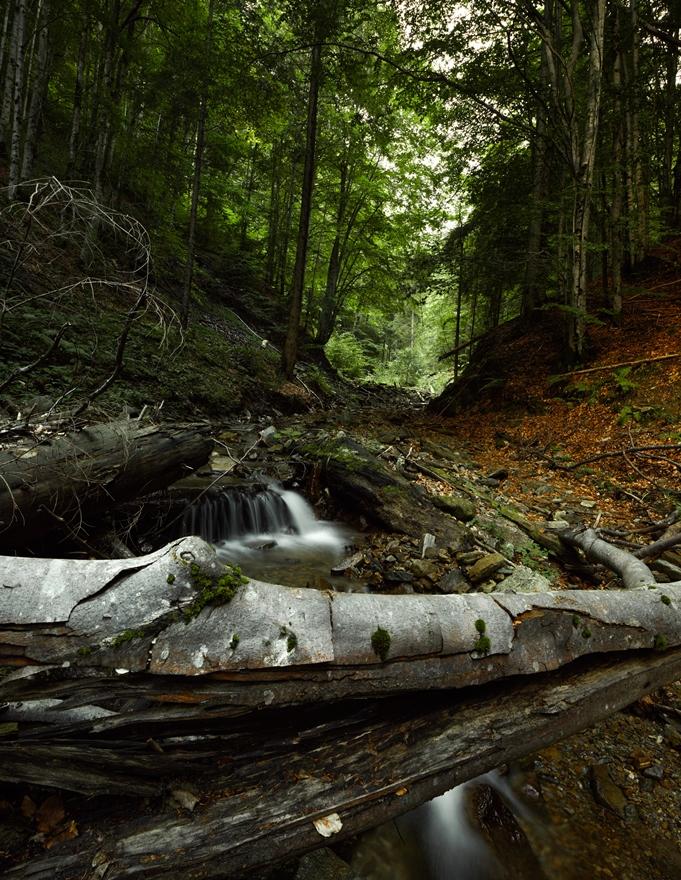 Râul și pădurea Cumpănița în Munții Făgăraș © Mitja kobal
