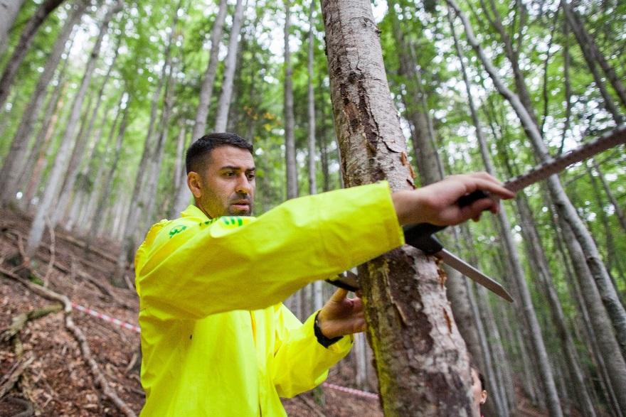 Voluntar Greenpeace măsurând un arbore mort în pădurea Cumpăna în Munții Făgăraș (c) Cristi Grecu/ Greenpeace