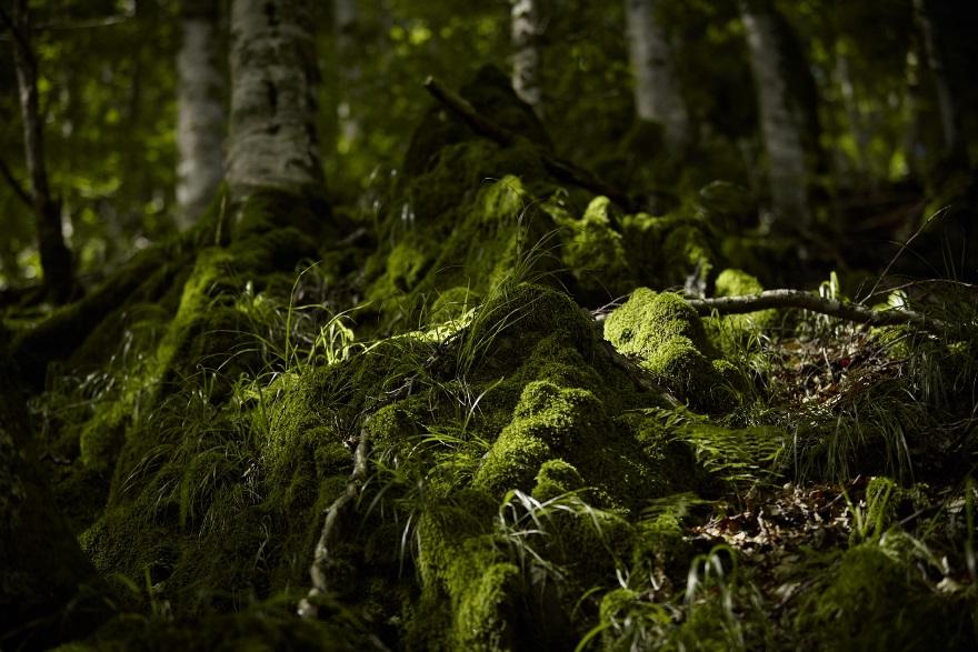 Pădurea virgină Mușeteica în Munții Făgăraș (c)Mitja Kobal