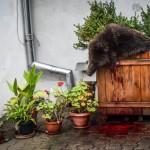 Ministerul Mediului cere clarificări în cazul ursului omorât la Sibiu