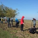 6.300 de puieți plantați de ViitorPlus prin voluntariat