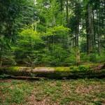 Forest Stewardship Council a decis să se dezasocieze de Holzindustrie ..