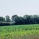 Un raport ONU contrazice corporațiile: Putem hrăni populația lumii fără ..