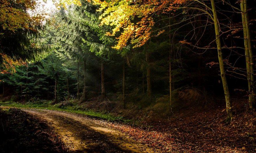 Pentru a prinde lumina cea mai bună, Felicia bate potecile din pădure cu orele. foto Felicia Aron